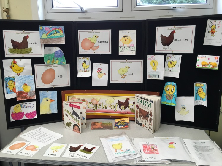 Living Eggs Display Board showing children's drawings of chicks