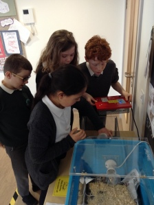 4 members of pupil council changing the water in the incubator.